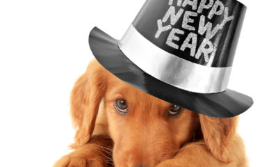 Neujahrswünsche für Hundefreunde