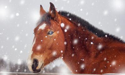 Neujahrswünsche für Reiter